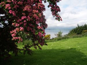 Großbritannien at its best: weite Wiesen und blühende Bäume