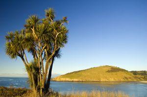 Küstenlandschaft Neuseelands
