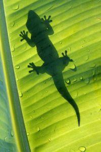 Kleine und große Wildtiere warten in Venezuela auf ihre Entdeckung