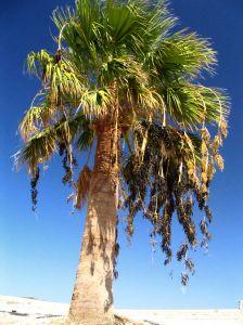 Palme an einem Strand auf der Insel Zypern
